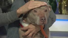 Pet Project: Penelope from NKLA Pet Adoption Center