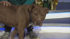 Pet Project: Rupert from West LA Shelter
