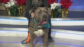 Pet Project: Hazel from NKLA