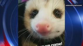 Costa Mesa man, pet opossum booted from JetBlue flight