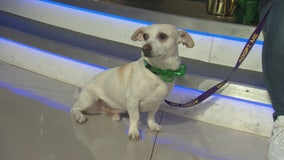 Pet Project: Auggie from Karma Rescue