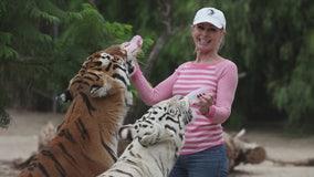 Tigers injure woman at her Moorpark animal sanctuary