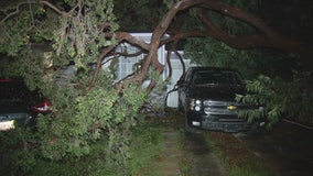 Storm causes trees to fall on two Lynwood homes
