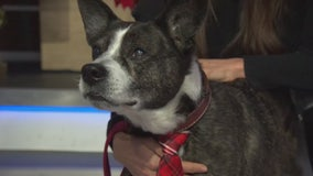 Pet Project: Henry from Karma Rescue