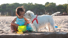 Growing up with a pet dog may lower risk of schizophrenia later in life, study suggests