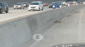 Kitten stranded on busy 91 freeway in Riverside saved by CHP officer