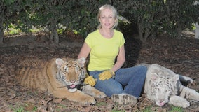 Tigers injure woman during event at her Moorpark animal sanctuary