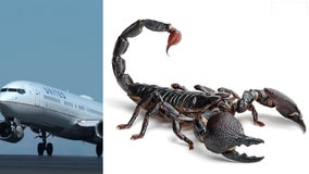Scorpion stings United Airlines passenger on flight from San Francisco to Atlanta