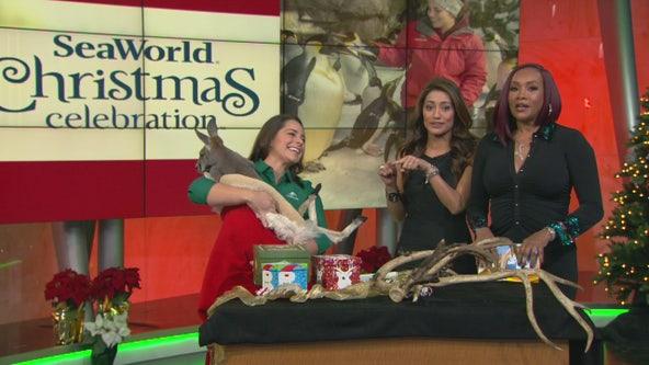 Celebrate Christmas at SeaWorld