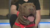 Pet Project: Puma from Paws for Life K9 Rescue
