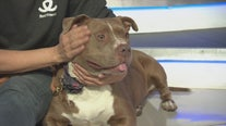Pet Project: Mississippi from Best Friends Animal Society