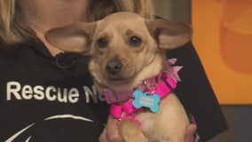 Pet Project: Makala from Paw Works
