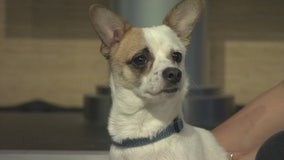 Pet Project: Eartha Kitt from Michelson Found Animals
