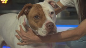 Pet Project: Carina from Karma Rescue
