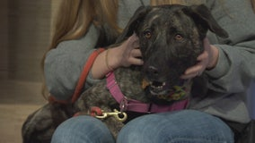Pet Project: Primrose from Best Friends Animal Society