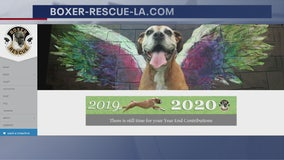 Can't adopt? Support local animal shelter by purchasing its 2020 calendar