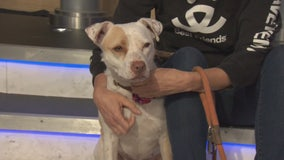 Pet Project: Pippi Longstocking from Best Friends Animal Society