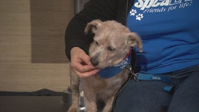 Pet Project: Francisco from spcaLA