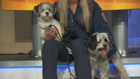 Pet Project: Ruff and Waffles from LA Animal Services