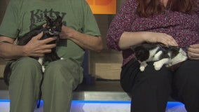 Pet Project: Petal and Sepal from Kitty Bungalow