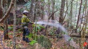 Australia firefighters save world's only rare dinosaur trees