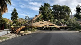 Strong winds strikes SoCal, bringing down trees