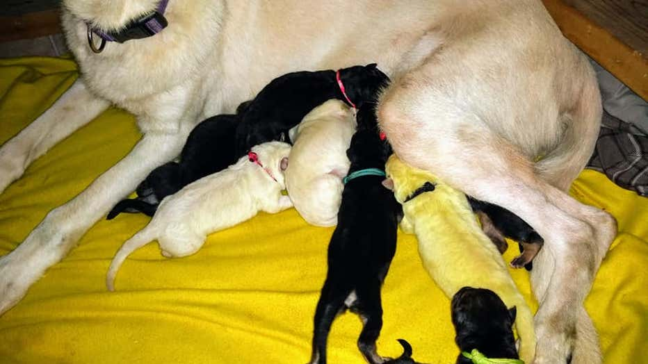 green-puppy-and-family.jpg