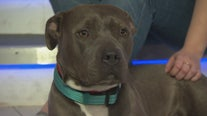 Pet Project: Molly from Michelson Found Animals Adopt & Shop