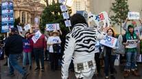 Picketing, pigeons, politics: Scenes from the Nevada caucus