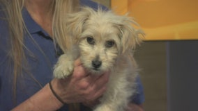 Pet Project: Regal from LA Animal Services