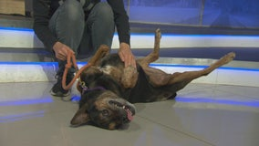 Pet Project: Lola from Best Friends Animal Society