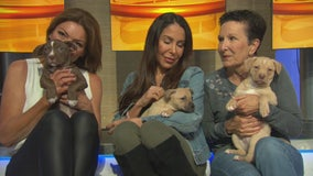 Pet Project: Phoebe, Riley, Coco and Olive from Labradors and Friends