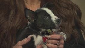 Pet Project: True from Doggie Tahiti