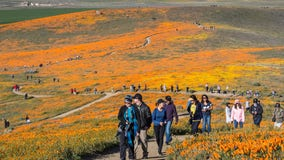 Dry winter may mean no repeat of 'superbloom' chaos