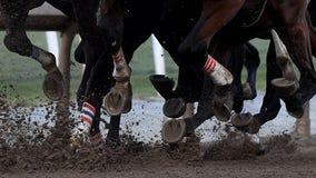 Two horses die at Los Alamitos Race Course