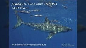 White shark named after Kobe Bryant