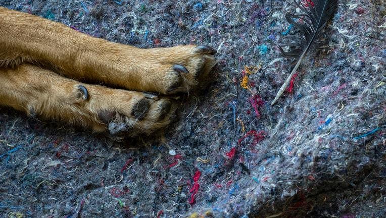 GETTY dog paw