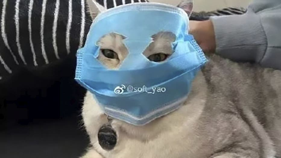 Animals-Face-Mask-ASIAWIRE-1.jpg