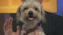 Pet Project: Lotus from Best Friends Animal Society