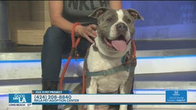 Pet Project: Casablanca from NKLA Pet Adoption Center