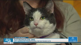 Pet Project: Stefano from Kitty Bungalow Charm School for Wayward Cats