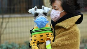 Coronavirus and pets: Your cat or dog probably can't get COVID-19, WHO says