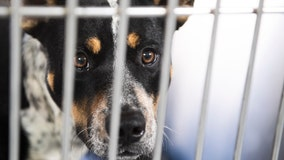 LA Animal Services will not be euthanizing animals, despite rumors on social media