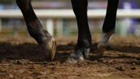Colt dies at Santa Anita after training incident