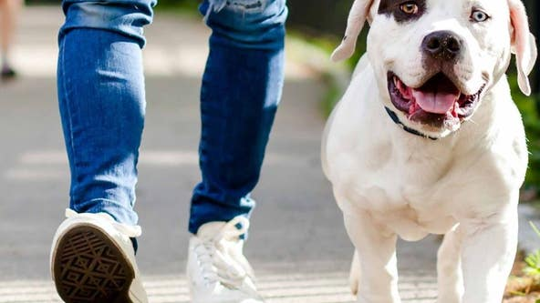 How #ViralKindness can help keep pets in homes during the COVID-19 crisis