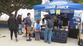 Shark Shack teaches shark safety