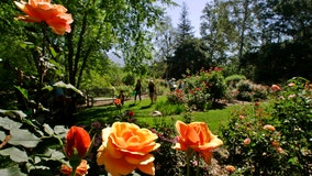 Descanso Gardens to reopen Saturday; social distancing guidelines in place
