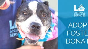 Petco to match $25K in donations to LA Animal Services until June 30