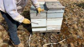 Man arrested for allegedly stealing $200,000 worth of beehives in 5 states