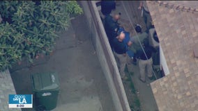 Mountain lion captured in Monrovia neighborhood